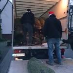 Tannenbaumverkauf